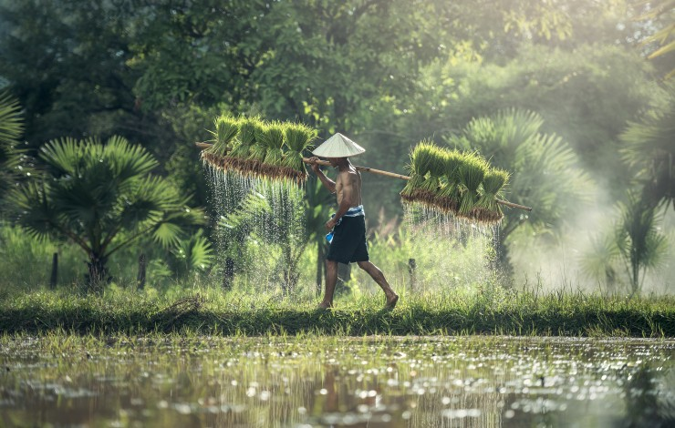 New Indonesia rice production report